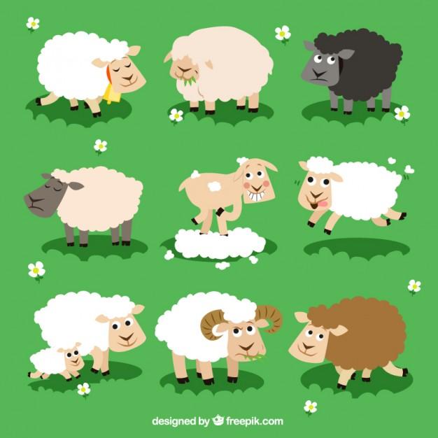 Vektörel Koyun Çeşitleri