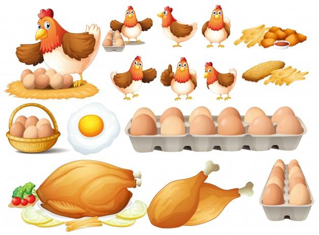 Vektörel Tavuk ve Yumurta