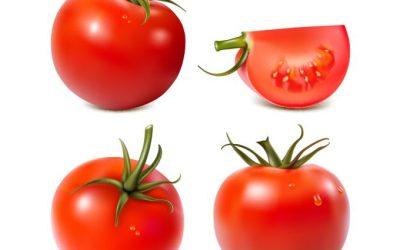 onizleme-27271-tomato-vector